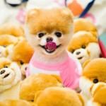 boo cute dog stuffed animal