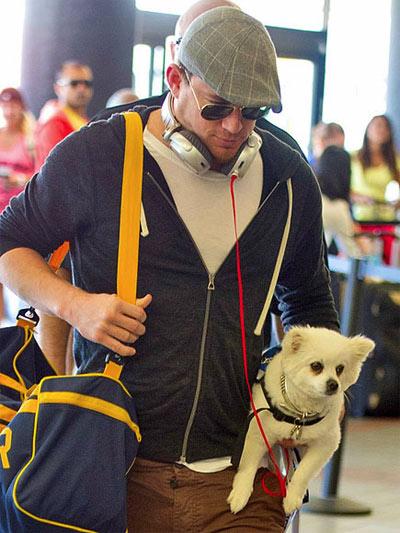 channing tatum dog airport