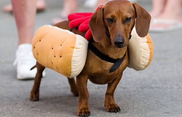 dachshund names german_food