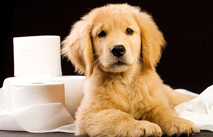 dog house training tips