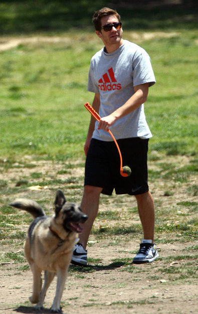 atticus lures jake to the dog park yet again
