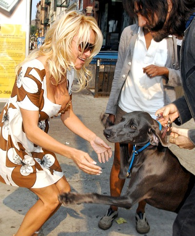 Pamela Anderson Makes A New Friend