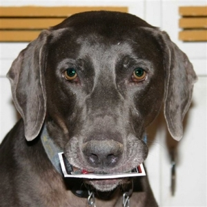 dogs chew michael vick cards
