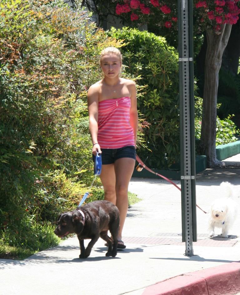 Hayden Panettiere Walks The Dogs