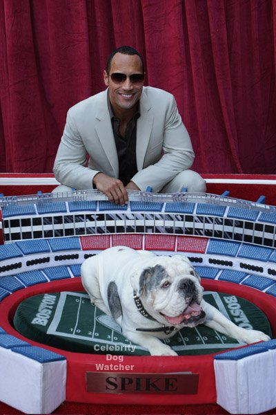 Celebrity Dog Bed pet accessories | Dog Accessories ...