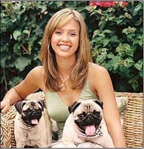 Jessica Alba Pug Dog