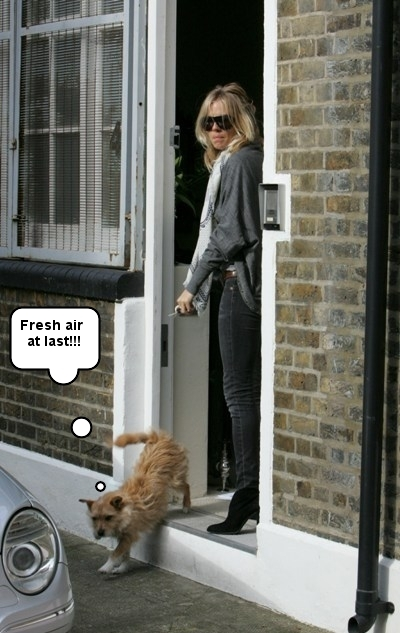 Sienna Miller 39 S Doggie Day In London