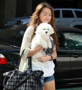 Miley Cyrus Maltipoo