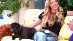 denise richards pug dog