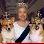 queen elizabeth corgi