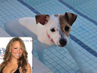 mariah carey jack russell terrier