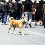 sausage riot dog