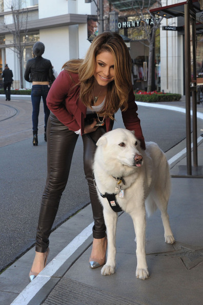 maria menounos dog work