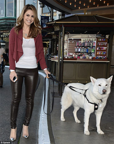 maria menounos rescue dog apollo