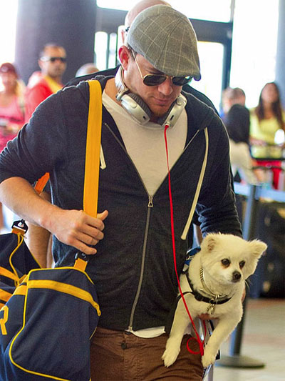 channing tatum dog airport
