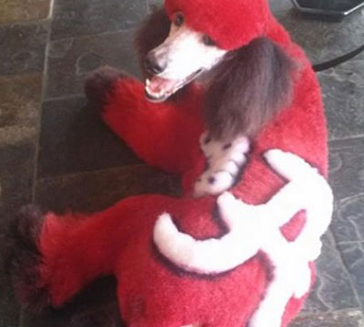 alabama crimson tide dog