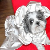 expensive dog wedding