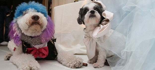 most expensive dog wedding ever