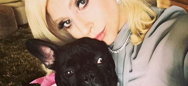 lady gaga dog asia