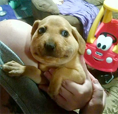 puppy stung by bee
