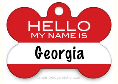 shutterfly dog tag hello name