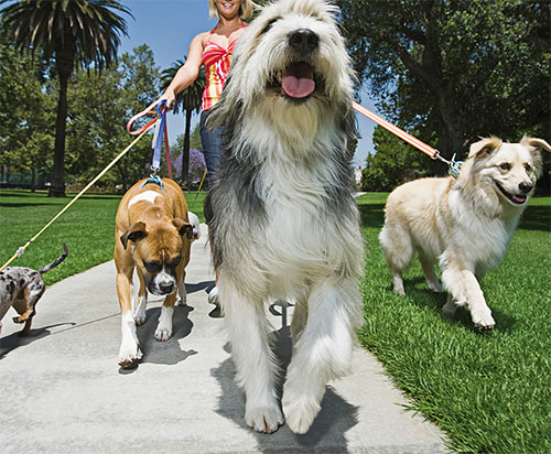 dog walking business ideas marketing