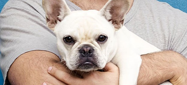 Celebrity French Bulldogs + 99 Awesome Frenchie Name Ideas