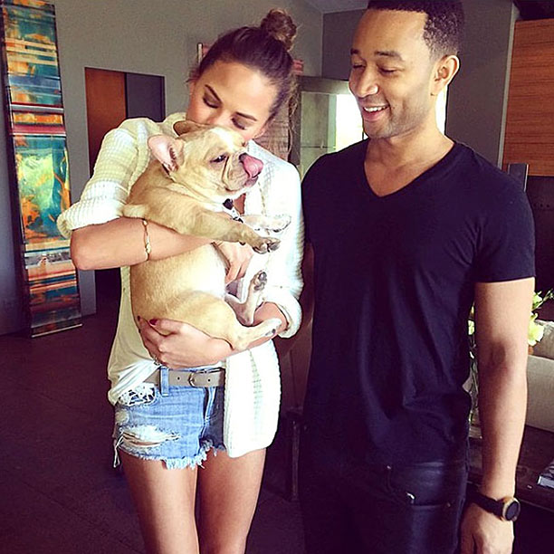 chrissy teigen french bulldog pippa