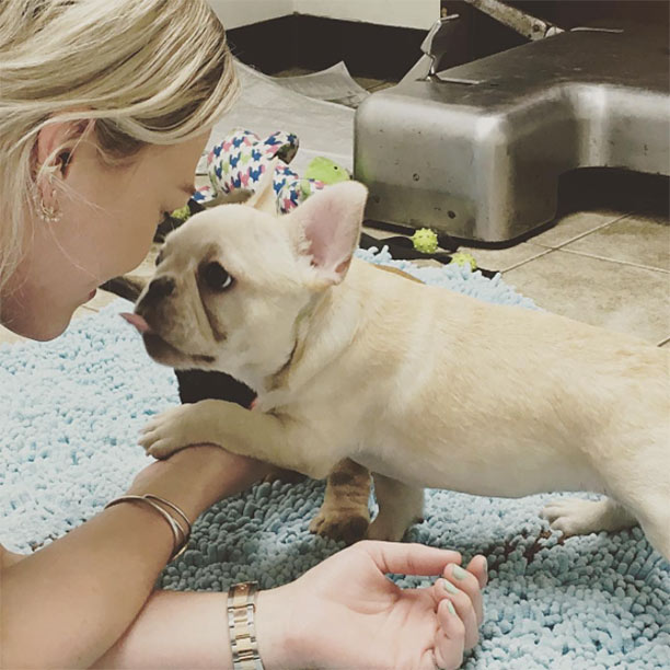 hilary duff french bulldog peaches
