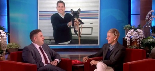 jonah hill french bulldog carmela