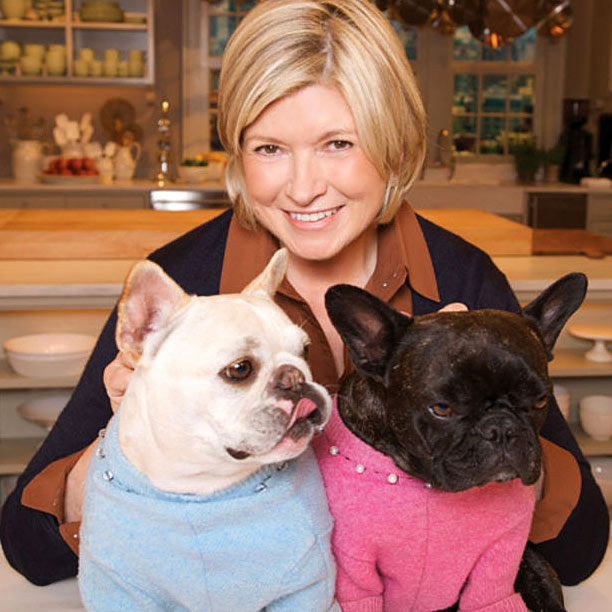 martha stewart french bulldog sharkey