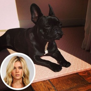 Nicola Peltz French Bulldog named Banksy