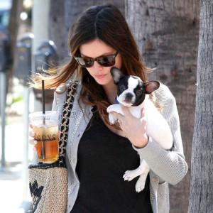 Rachel Bilson French Bulldog Thurman