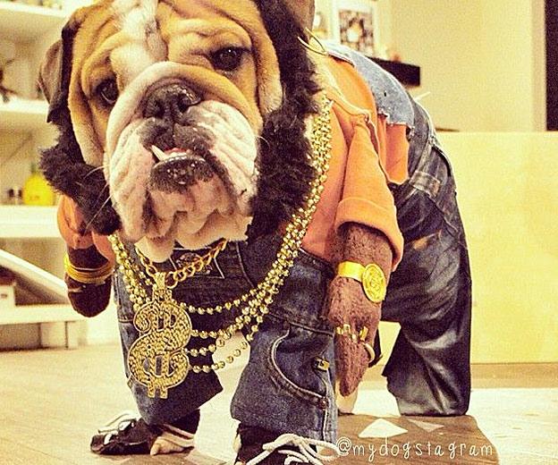 funny bulldog costume