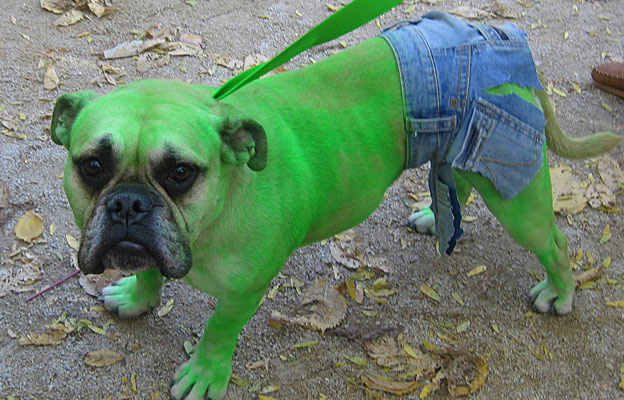 funny dog costume ideas & Hollywood-Inspired Dog Costumes for Halloween