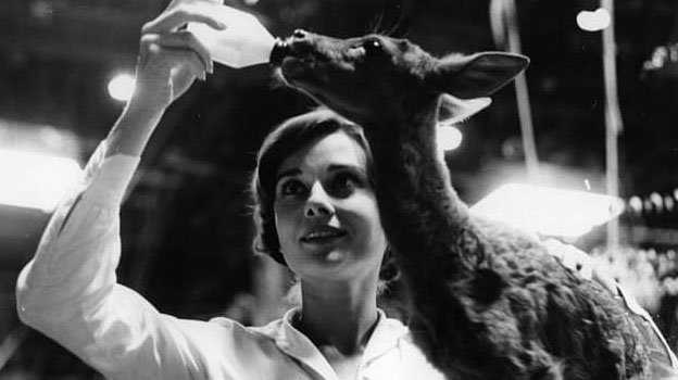 audrey hepburn pet deer