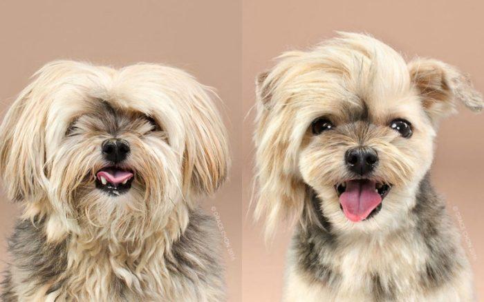 funny dog hair