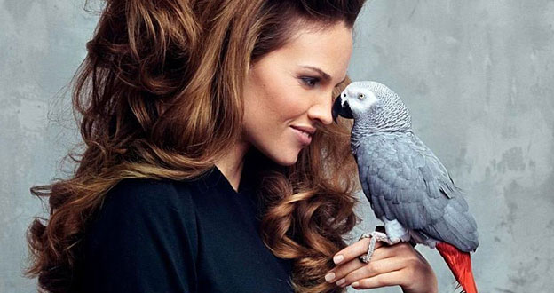 hilary swank pet parrot