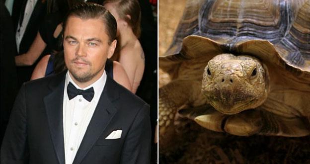 leo dicaprio pet turtle