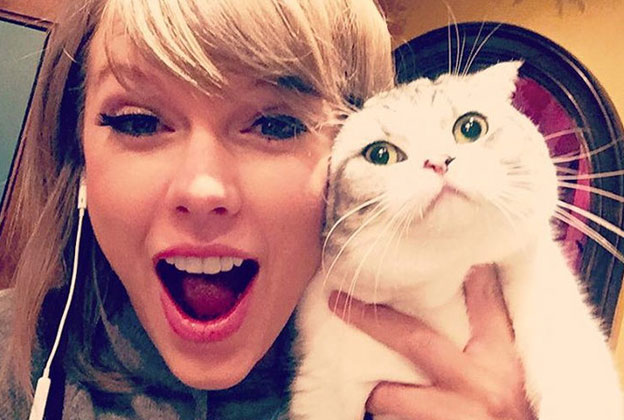 taylor swift cat white