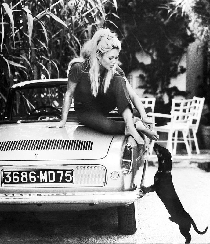 bridgitte bardot dachshund name clown