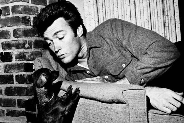 clint eastwood dachshund red