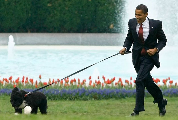 celebrity run dog