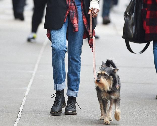 cardigan jeans dog