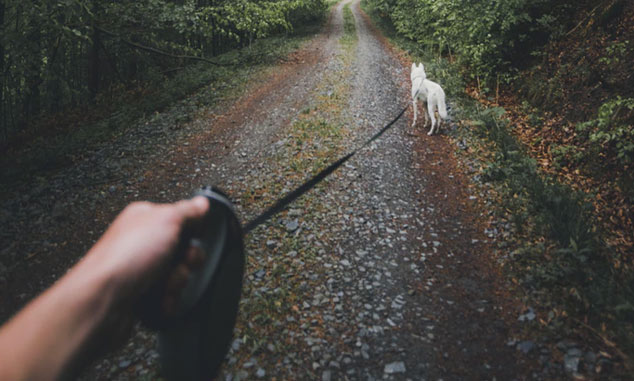 long leash
