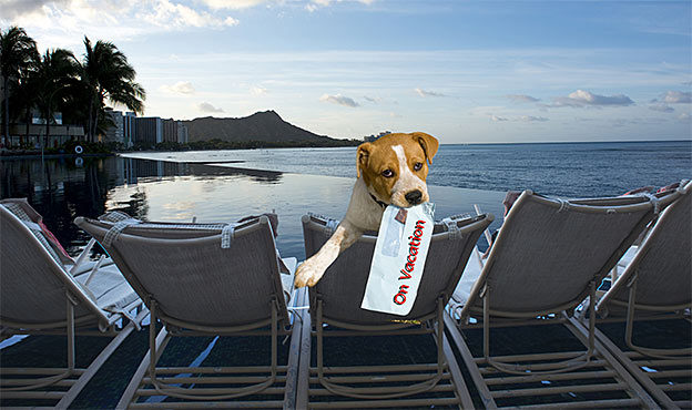 dog luxury vacation
