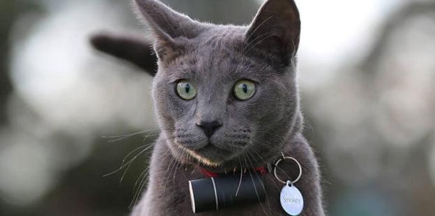 cat gps