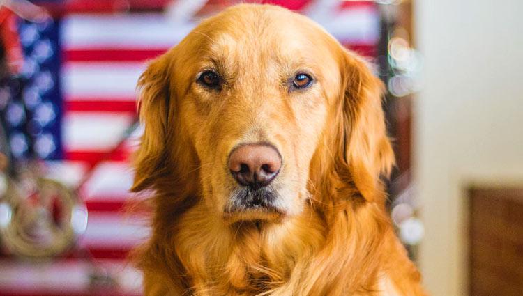 golden retriever best dog breed for kids