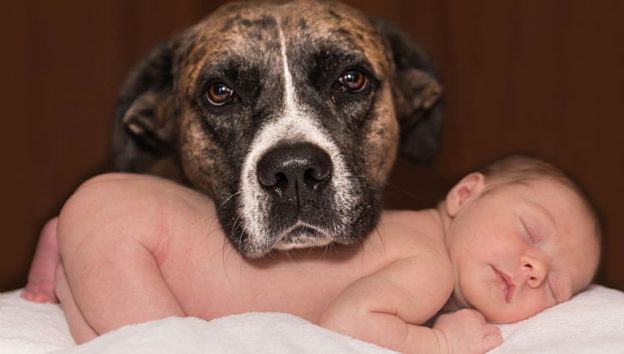 Top 10 Best Dog Breeds For Families With Young Children