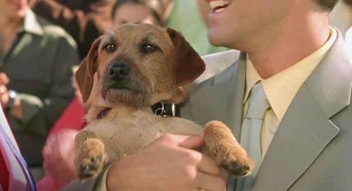 odie garfield movie 2004 dog